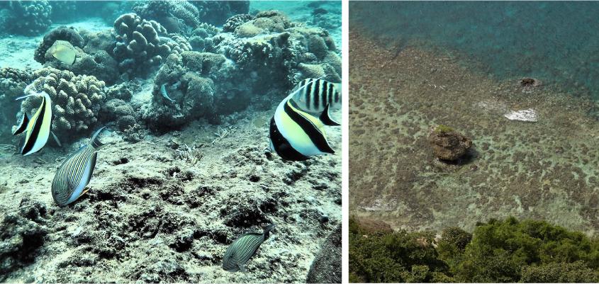 The marine ecosystem on Christmas Island